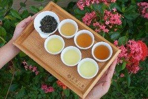 鵝山(オァー・サン)茶園有機体験農場
