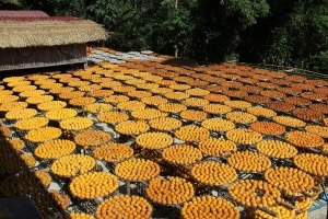 味衛佳干し柿教育農園